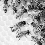 New research prove bees understand the concept of zero